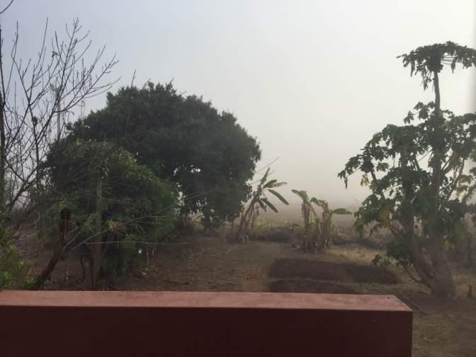 foggy back yard 08 2016.jpg